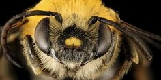 16 Types of Bees With Pictures - ProGardenTips African Honey Bee, Getting Rid Of Bees, Insect Repellent Plants, Sweat Bees, Photography Set Up, Types Of Bees, Honey Bee Hives, Mason Bees