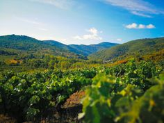 #viñedos en #elbierzo entre #toraldemerayo y #villalibredelajurisdicción #vineyard #jakobsweg #stjamesway #theway #pilgerweg#pilgern #iperegrinos #pilgrims #caminosantiago#caminodesantiago #elcaminodesantiago#buencamino #pilgrimage #peregrina #peregrinacion#ultreia #peregrinos #peregrina #senderismo#trekking #hiking #naturelovers #bosque #wayofstjames