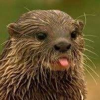 Otter ♡