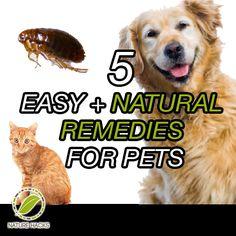 5 Simple Pet Remedies