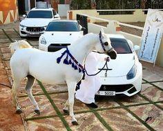 الله ما أجملها Majestic Horse, Beautiful Horses, Animals Beautiful, Arab Swag, Arabian Beauty, Akhal Teke, Foto Art, White Horses, Horse Tack
