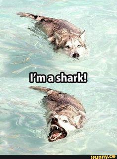 cute, dog, shark, lol