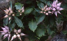 I fiori del Cansglio   http://www.alpagocansiglio.eu/it/sport-e-natura/natura-in-alpago
