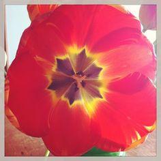 .@Agence Développement Violette (Helena Amourdedieu) s Instagram photos | Webstagram - the best Instagram viewer