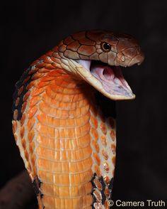 Beautiful...#snake #reptile