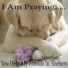 This is a prayer every animal lover should be answering.