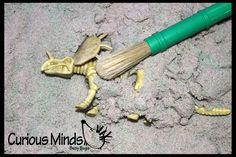 Dinosaur Dig Excavation Sensory Bin Toy - Dino skeleton, fossil Game