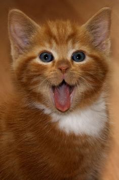 This little dude who is EXTREMELY surprised. | 39 Overly Adorable Kittens To Brighten Your Day