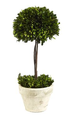 http://www.heeney.com/products/boxwood-half-ball-topiary.html