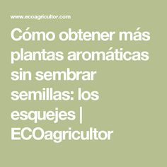 Cómo obtener más plantas aromáticas sin sembrar semillas: los esquejes | ECOagricultor Food And Drink, Education, Gardening, Gardens, Hibiscus, Growing Plants, Vegetables, Tropical Garden Design, Plants