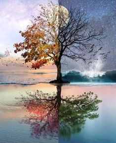 Beautiful Fantasy Art, Dark Fantasy Art, Dark Art, Christmas Tree Wallpaper Iphone, Nature Pictures, Beautiful Pictures, Amazing Photos, Closer, Simplicity Photography