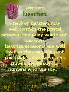 Fairy plants: heather. It was tough deciding whether to put this on my fairy board or my Scotland board!