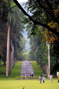 Peradeniya Royal Botnical Garden — Kandy, Sri Lanka.  Via Sasika Poorna Boralessa / Facebook The ART Gallery