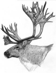 deer horn illustration - Google 搜索