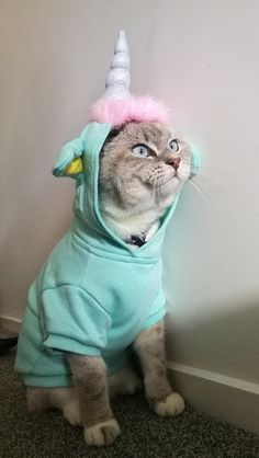 Cute Funny Animals, Funny Animal Pictures, Cute Baby Animals, Cute Cats, Funny Cats, Funny Humor, Kitty Play, Photo Chat, Pet Day
