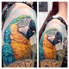 Evan Olin - Full color realistic parrot tattoo