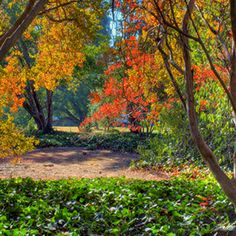 Fall color for warm climates-eight plants that color up nicely in warm climates: