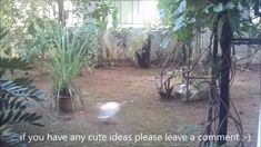 First Adventures Of Mom Cat And Kittens In The Garden - Cute Funny Kitte...