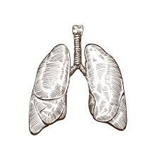 Картинки по запросу lungs art
