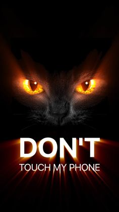 Orange eyed cat / don't touch my phone iPhone wallpaper