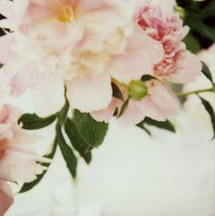 Taken with an antique Polaroid SX-70 camera. Photographs from this camera have a lovely soft texture, full of vintage charm All photographs are printed on premium quality, archival paper for a photogr