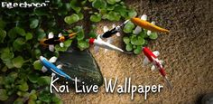 Koi Live Wallpaper Pro Apk Free Download | Bedroom and Living Room