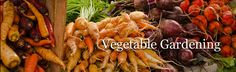 Post image for Winter-The Best Time to Work on Your Vegetable Garden