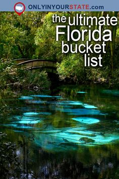 Travel | Florida | Attractions | USA | East Coast | Bucket List | Things To Do | Beautiful Places | Vacations | Weekend Getaway | Places To Visit | Key West | Small Towns | National Seashore | Beaches | Natural Wonders | Nature | Gulf Islands | State Parks | Caves | Outdoor | Adventure | Florida Reef | Ocean | Everglades | Gardens | Museums | St. Augustine | National Forest | Coral Castle | Natural Pools | Swimming Spots | Castles | Disney World | Waterfalls