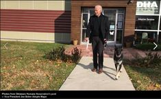"""Shamontiel wrote """"'Major' news: First rescue dog makes his way to the White House ~ Biden's dog choice brings up importance of adopting shelter dogs"""" #dogowner #fosterdog #petfostering #dogadoption #adoptadog #dogsnews #JoeBiden (Photo credit: Delaware Humane Association Facebook page)"""