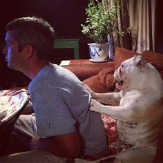 Bulldog Massage