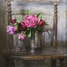 Peonies - Sadie Olive