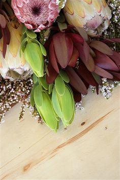 Fynbos & Proteas