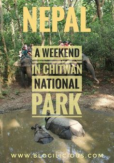 An Eventful Weekend in Nepal's Chitwan National Park