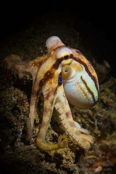Octopus by Mike Bartick