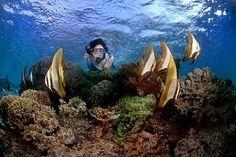 Snorkling in Menjangan Island, Bali