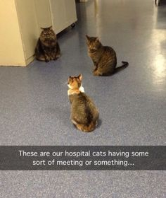 Why don't the hospitals I ever go to have hospital cats!!!!