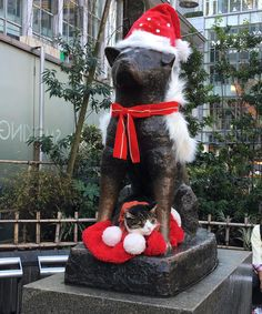 Hachi today :) Xmas is all around