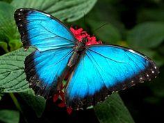 VIAGEM dos sentidos por uma cor Magnifica o AZUL          Azul é a cor da vida  Azul é céu e mar  é flor que nos convida  a no seu reino e...