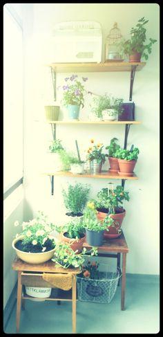 Vertical garden with flowers ans herbs