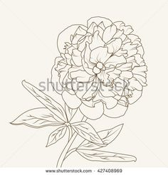 Peony flower isolated black on white background. Hand-drawn contour lines and strokes. - stock vector