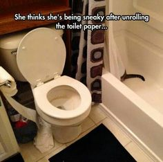 "I thought it was a snake and thought ""How the heck can a snake unroll toilet paper?"" XD"
