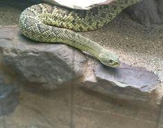 I snake u