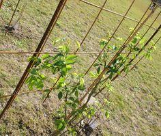 Sombre, Pergola, Outdoor Structures, Gardens, Rose Bush, Plants, Outdoor Pergola, Arbors, Pergolas