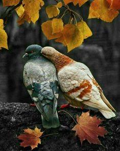 Pretty Birds, Beautiful Birds, Animals Beautiful, Simply Beautiful, Beautiful Pictures, Nature Animals, Animals And Pets, Cute Animals, All Birds