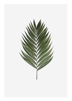 Palm leaf, plakat