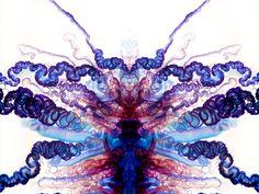 電気クラゲのサイケデリックな写真:ギャラリー « WIRED.jp