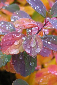 Dew Drops on Leaves, Rain Photography. Dew Drops, Rain Drops, Flower Wallpaper, Nature Wallpaper, Leaves Wallpaper, Beautiful Wallpaper, Mobile Wallpaper, Iphone Wallpaper, Rain Photography