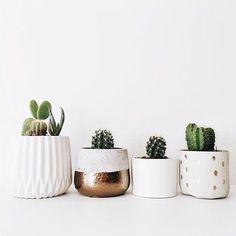 White ceramic cacti