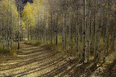 Autumn by bahus57, via Flickr