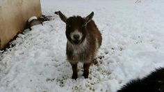 My fat boy in the snow.  His name IS Fox-Anna Nicole Smith